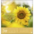 Ich wünsch' dir ... Tage voller Glück Postkartenkalender 2021.